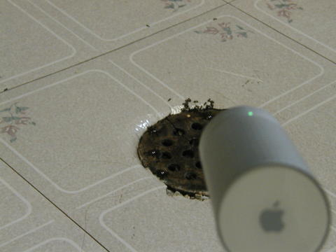 iSight watches ants